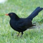 Alberti_cropped_bird_featurephoto