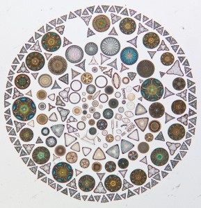 mosaic made out of different shaped diatoms