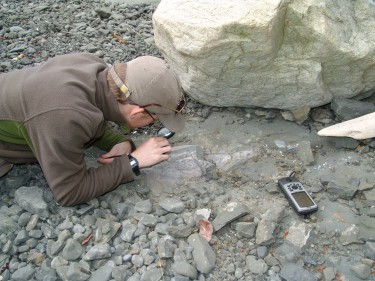 Adam Huttenlocker, then a UW graduate student and Burke Museum paleontologist, examines the first dinosaur fossil found in Washington state at Sucia Island State Park in the San Juan Islands.