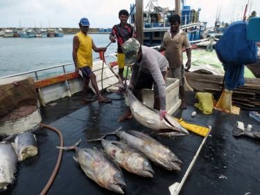 fishermen unload fish onto their boat.