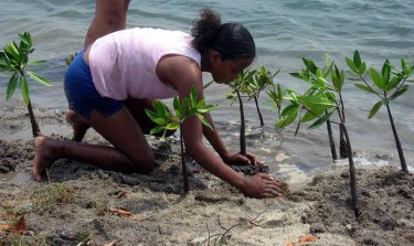 Planting mangroves for coastal protection in Placencia, Belize.