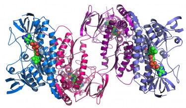 protein folding image