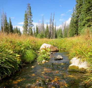 A stream in Wyoming.