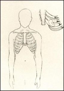 diagram of ribs