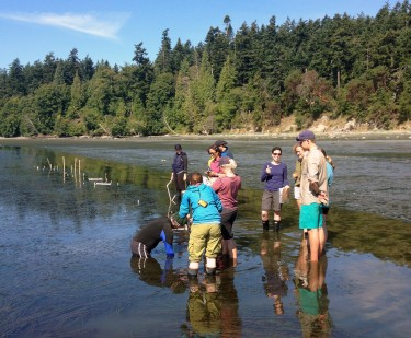 Students in the Ecology of Infectious Marine Diseases course do surveys for eelgrass disease.