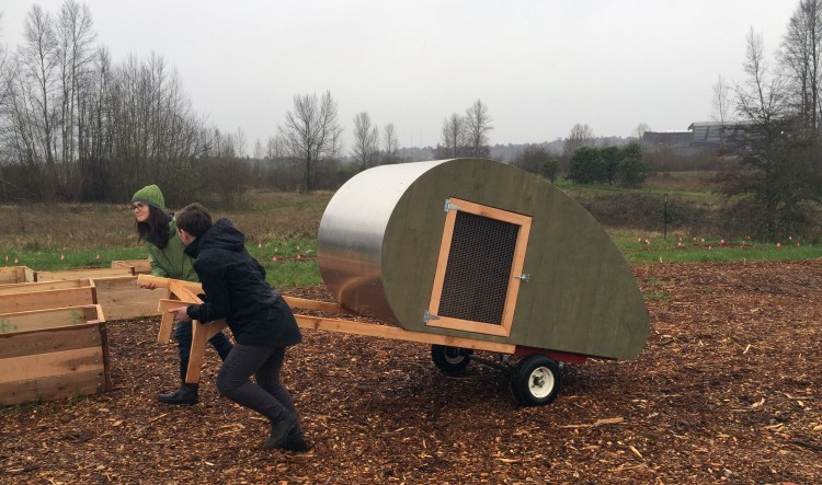 moving a new chicken coop at uw farm.