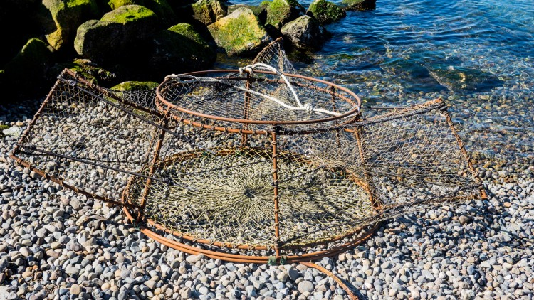 an example of a new lingcod trap