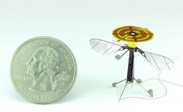Image of flying insect robot