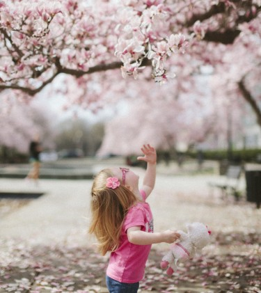 child looking at tree blossoms
