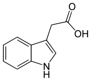 Chemical structure of auxin, the most ubiquitous plant hormone.