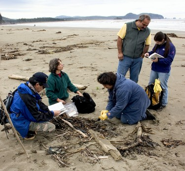 Participants in the COASST program collect data on the identity and condition of a bird on the northern outer coast of Washington state.