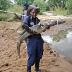 Bogezi captures a crocodile during one of her research projects in Uganda.