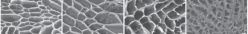 Artificial scaffolds with pores for cellular growth.