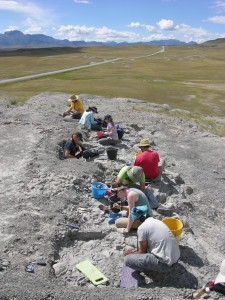 A site where researchers are digging up fossils.