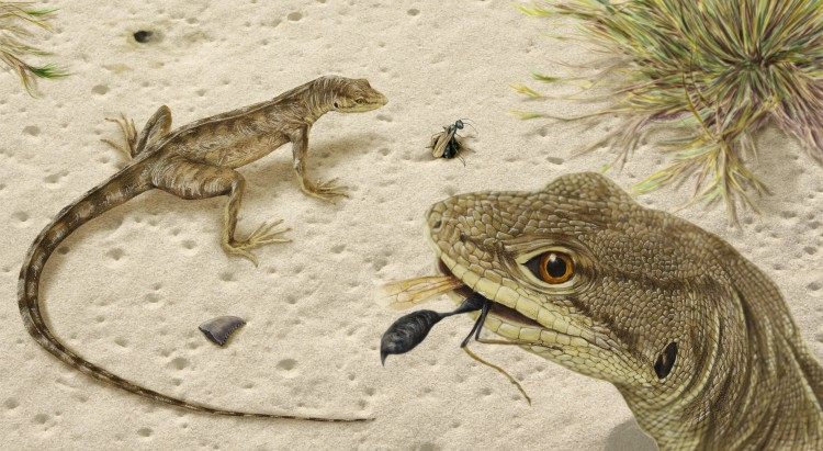 An illustration of an extinct lizard.