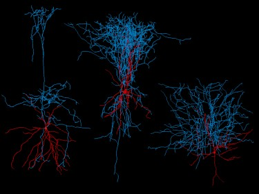 image of neuron reconstructions