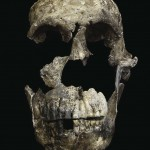 This skull, part of a skeleton that scientists have named Neo, was found in the Lesedi Chamber of the Rising Star Cave system in South Africa. Most of the bones in the middle of the face are intact, unlike another skull found in a nearby chamber of the cave system.