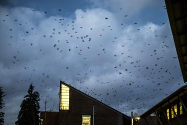 birds on building