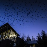 crows above campus building