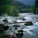 Elwha River - Olympic National Park