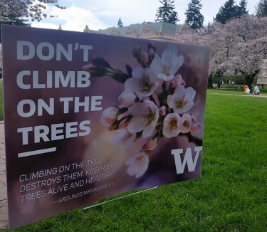 UW Facilities Services asks visitors to the Quad to avoid damaging the trees by not jiggling the branches, climbing on the trees and peeling off bark.
