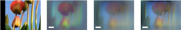 For the color image of flower buds at the far-left, a traditional metalens (second from left) captures images with strong chromatic aberrations and blurring. The UW team's modified metalens (third from left) yields an image with similar levels of blurring for all colors. But the team removes most of these aberrations using computational filtering, producing an image (right) with high structural similarity to the original.