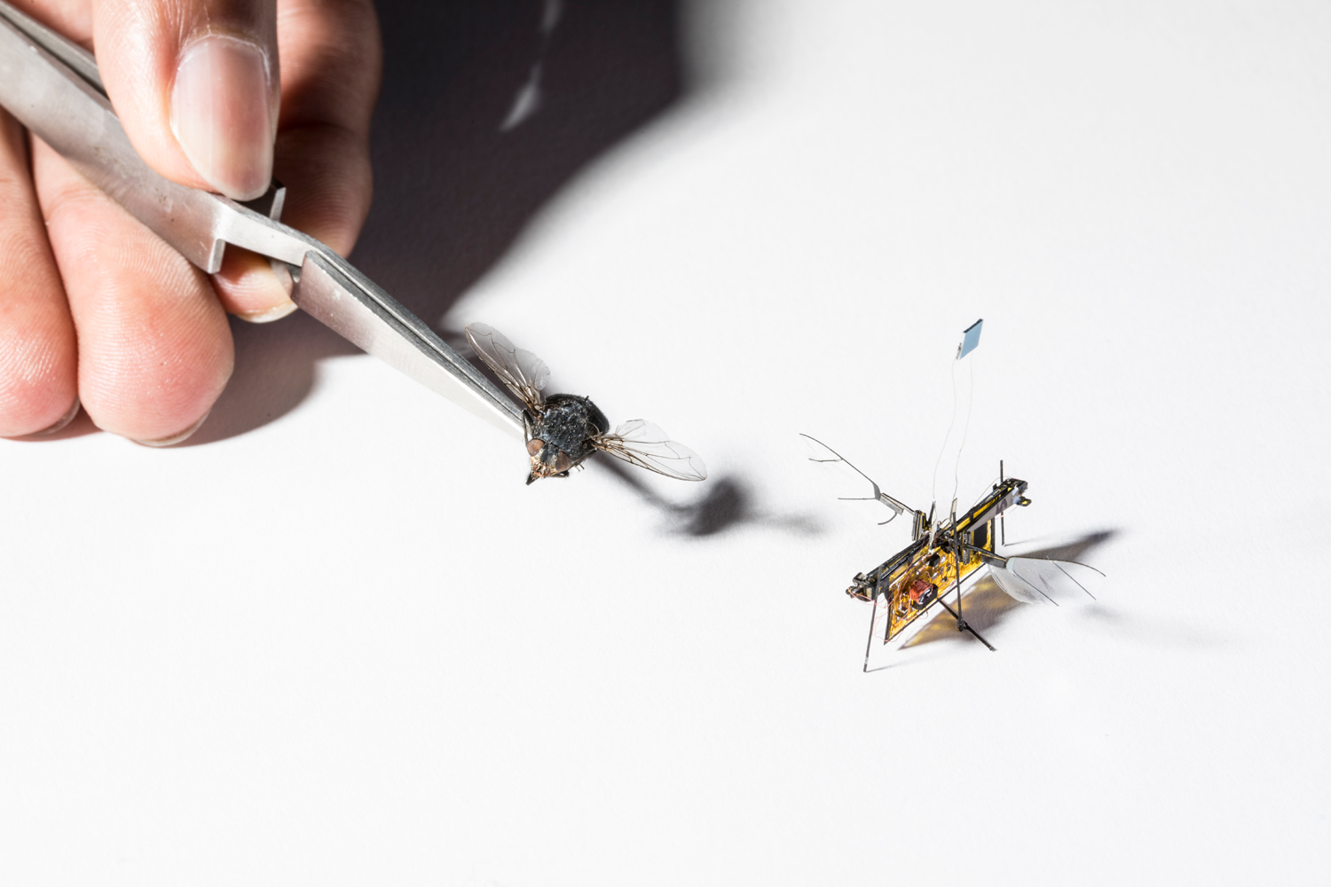 The first wireless flying robotic insect takes off | UW News