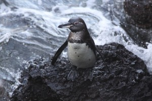 A penguin standing on the shore.