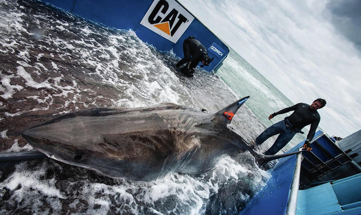 Great white sharks dive deep into warm-water whirlpools in the Atlantic