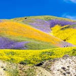 wildflowers on hill