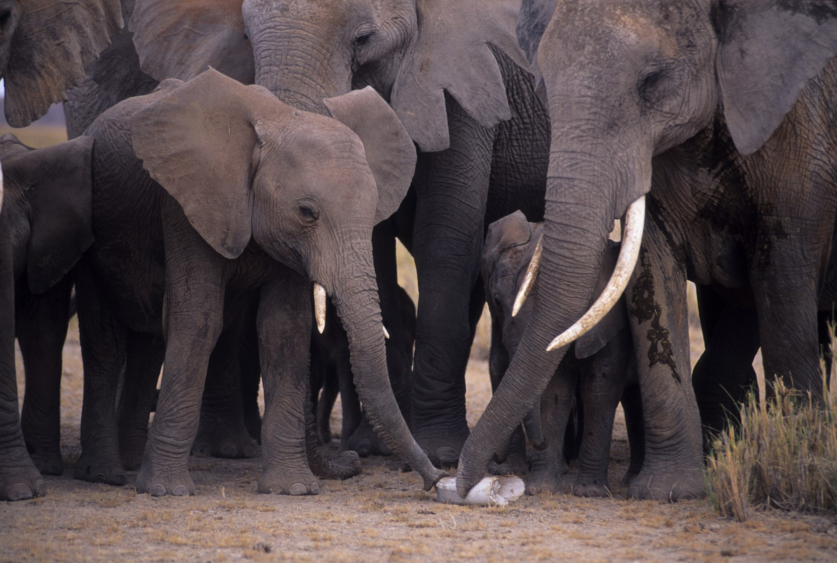 3a96f5c83e6c DNA testing of illegal ivory seized by law enforcement links ...