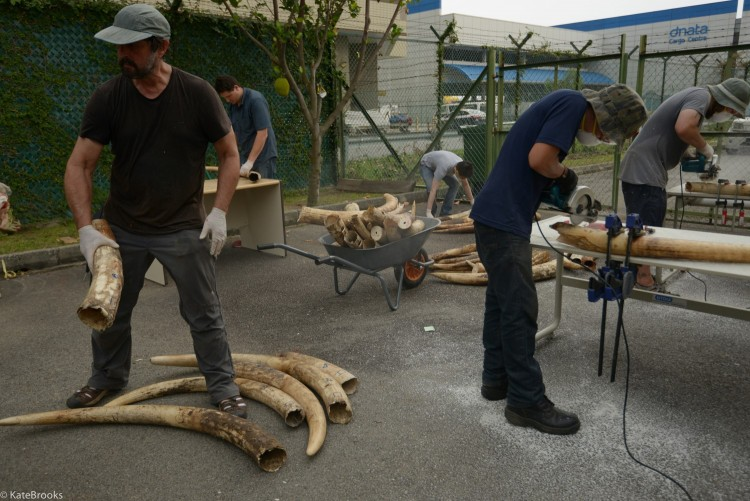 Scientists working to study elephant tusks.