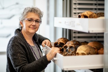 Patricia Kramer, a University of Washington professor of anthropology, is part of an international team that completed a virtual 3D reconstruction of portions of a Neandertal skeleton. Here, she shows part of the collection of model Neandertal skulls at Denny Hall.