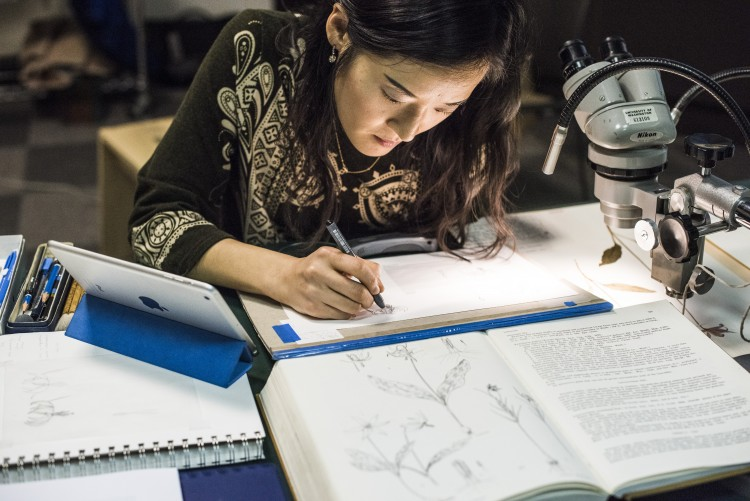 An illustrator working at her desk.