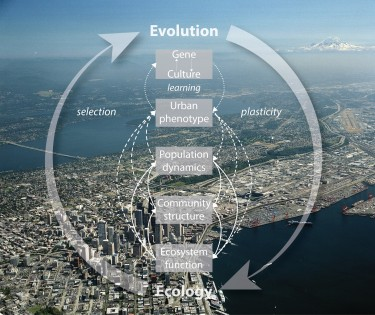The cycle of eco-evolutionary feedback -- the topic of a new research coordination network funded by the National Science Foundation.