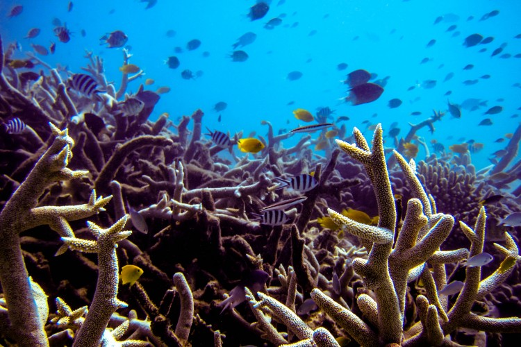 Fish swimming in a coral reef.
