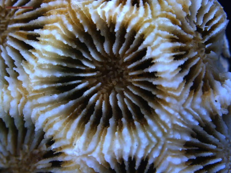 Skeleton of a coral.