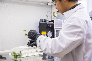a scientist puts a plant into a glass tube