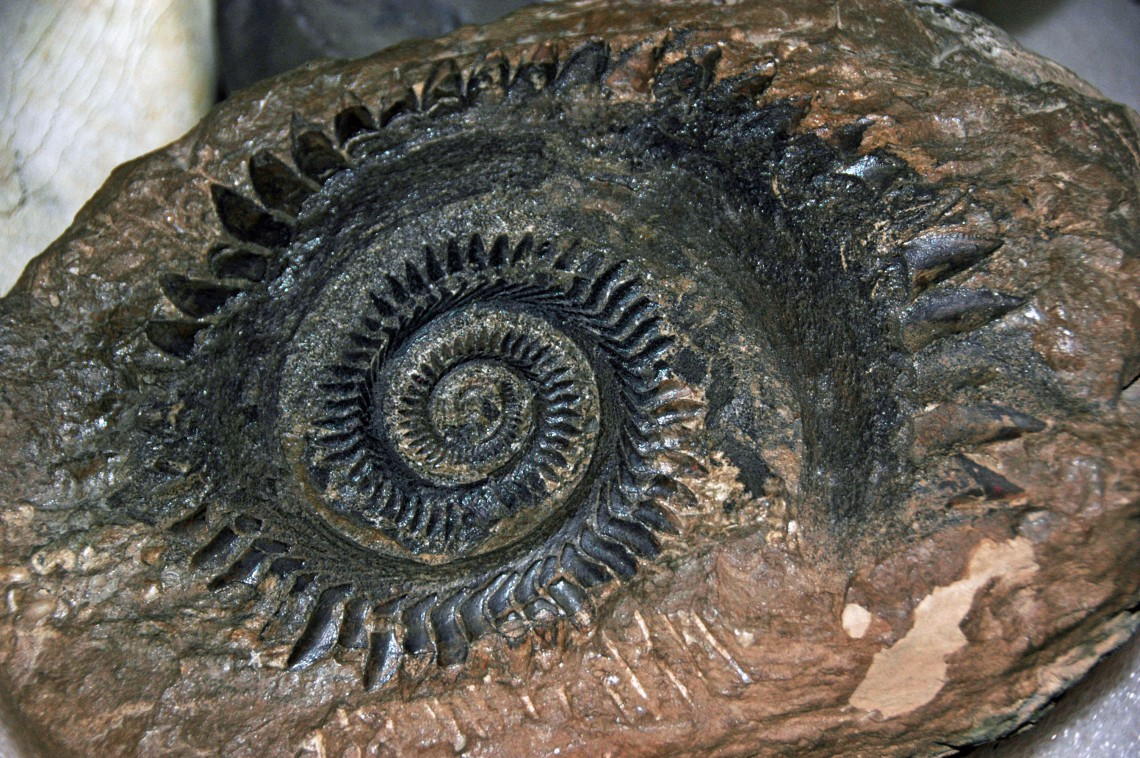 rock with spiraling tooth pattern
