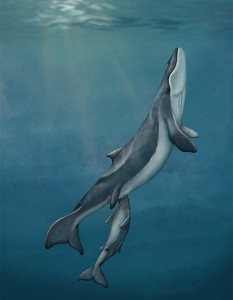 drawing of whale