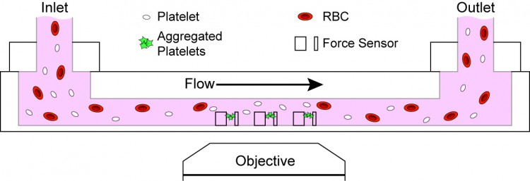 graphic of the microfluidic design