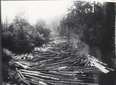 black and white photo of logs