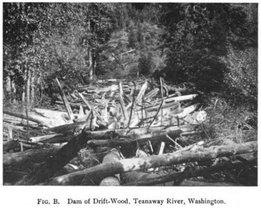 wood debris in river