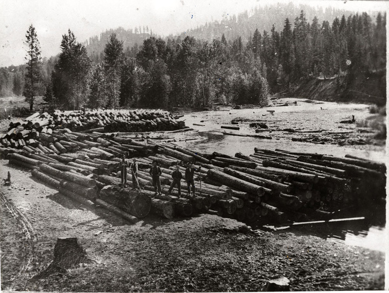 logs by river bank