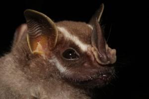 an image of a bat