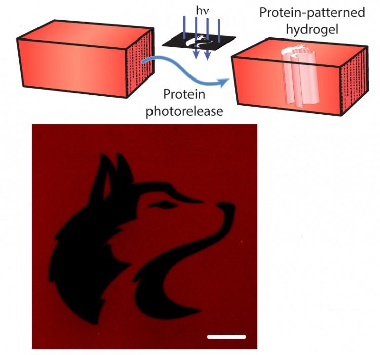 A biomaterials experiment