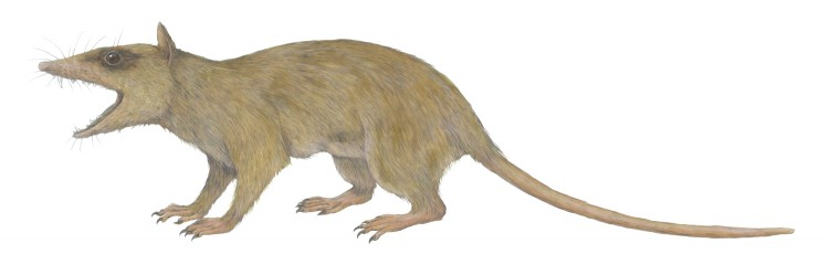 A small mammal from the Cretaceous Period