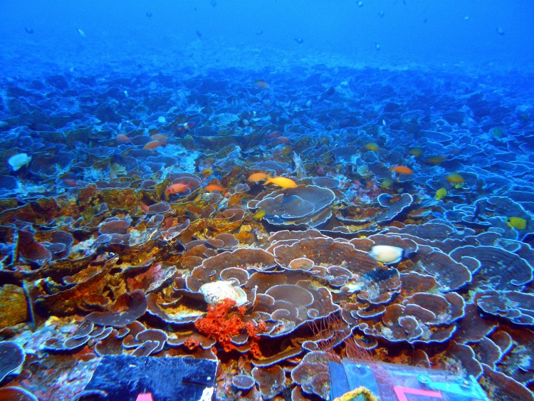 Corals that live in the mesophotic zone need very little light to survive.