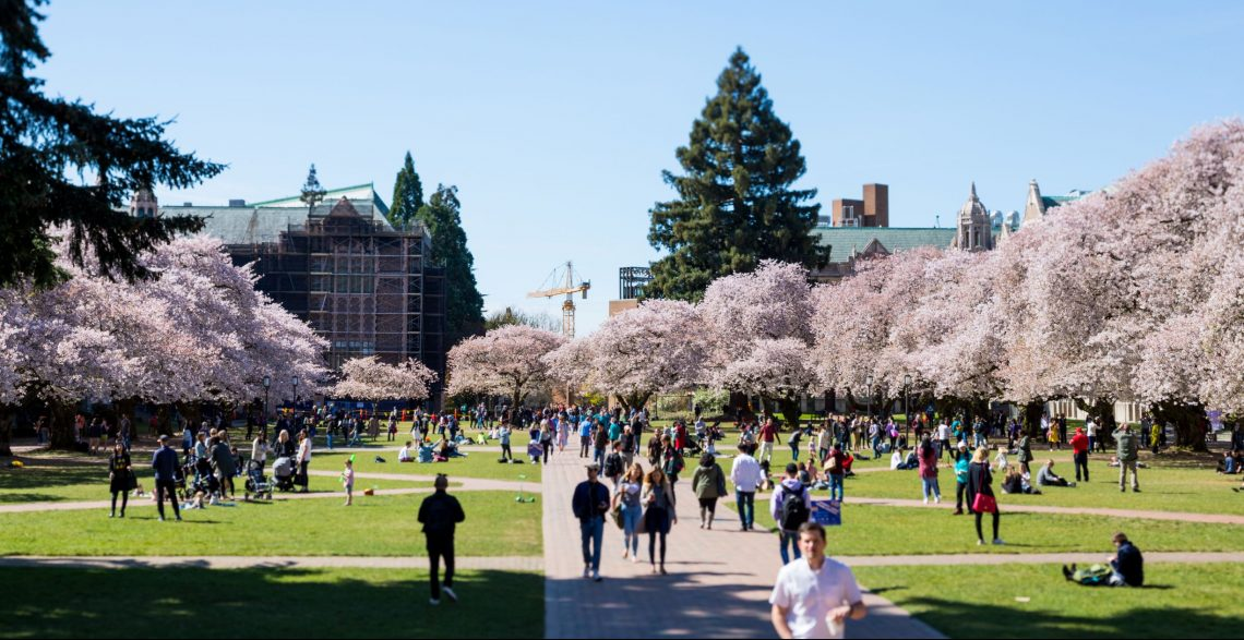 people and trees with pink blossoms