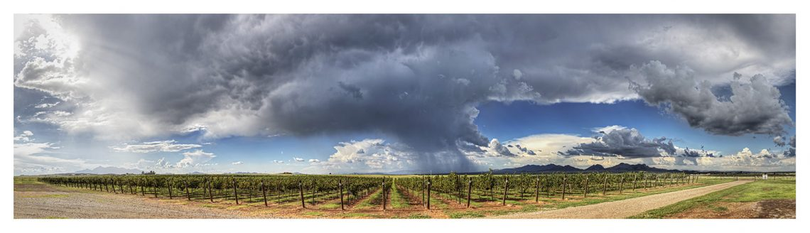 vines with storm cloud above